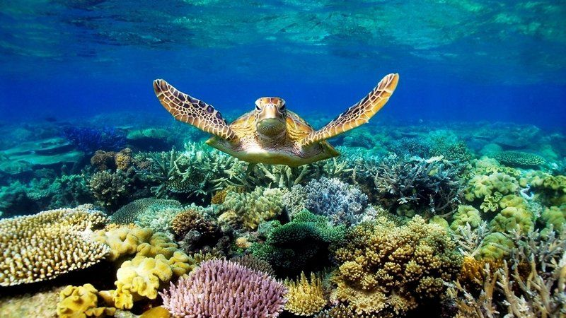 We are petitioning for action to be taken by the Australian government against the mining of the company, Adani, that plans to coal mine in the Galilee Basin because this plan poses irreversible problems for the Great Barrier Reef, a cultural and historical treasure of Australia.    The Great Barrier...