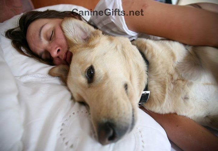 Visit Caninegifts Net For More Dog Photos Canine Photos