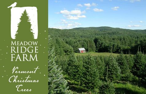 Vermont Mail Order Christmas Trees, balsam fir tree farm, Vermont ...
