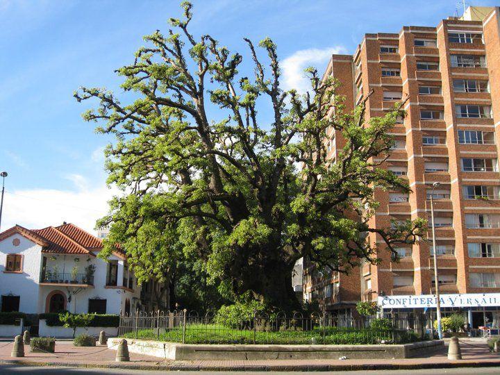 Pocitos Montevideo Uruguay El Ombu Con Imagenes Uruguay
