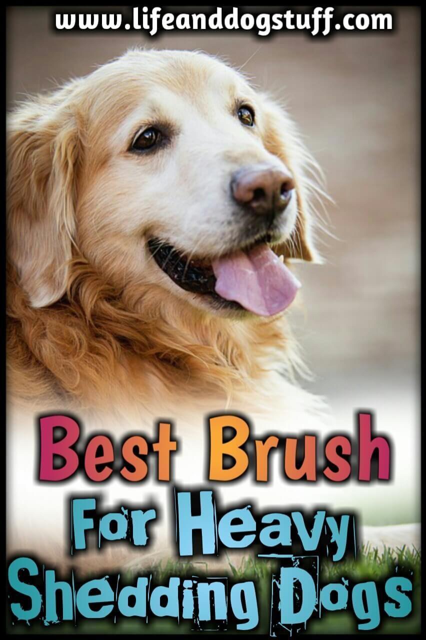 Best Brush For Heavy Shedding Dog Fluffy S Reviews Dog Shedding Deshedding Dog Dog Brushing
