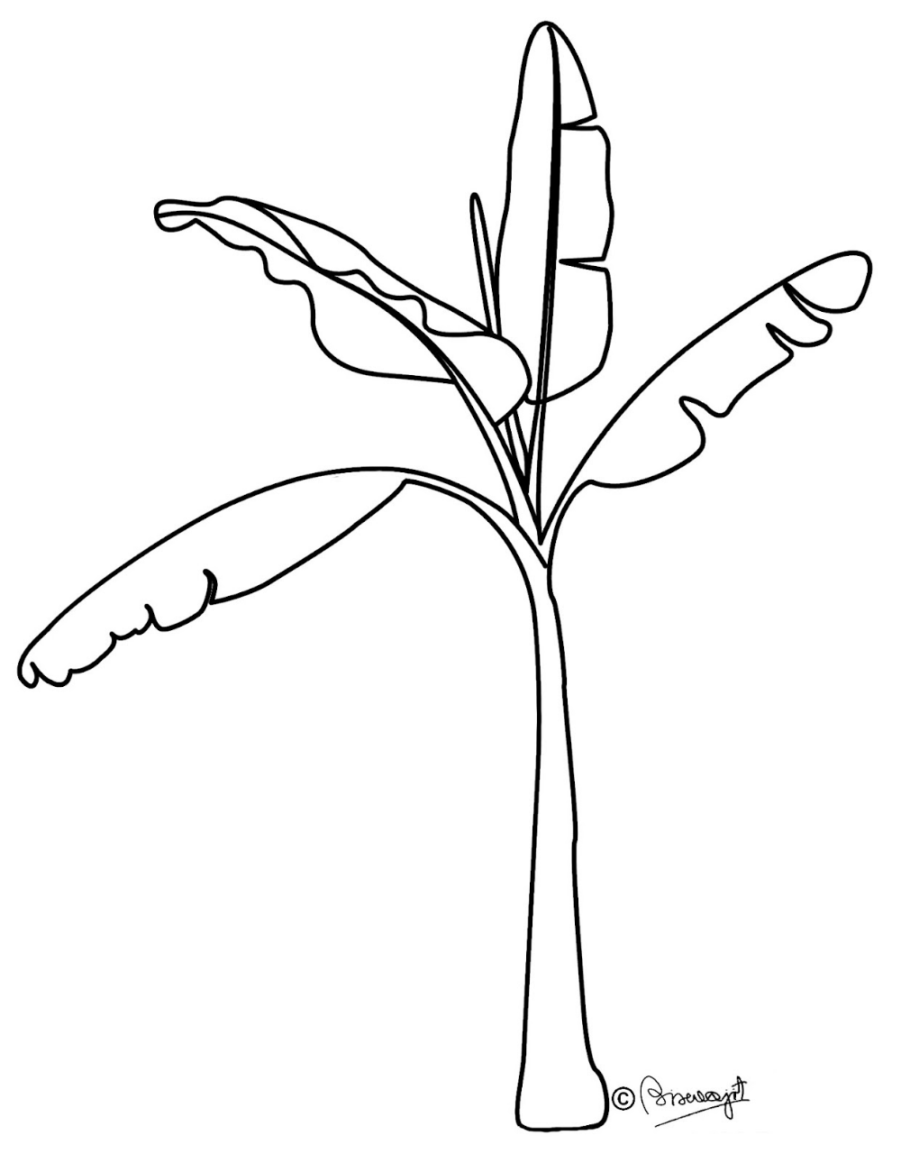 Free Banana Outline Cliparts Download Free Clip Art Free Clip Art On Clipart Library Tree Drawing For Kids Tree Drawing Simple Clipart Black And White