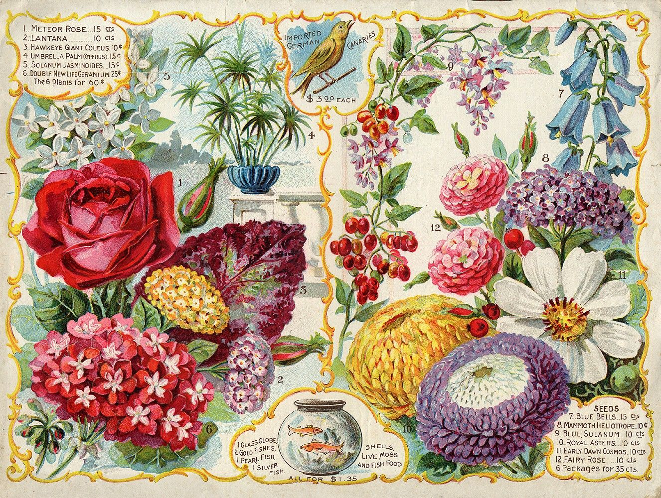 back of 1894 seed catalog Flower seeds packets, Flower