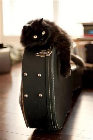 Pin By Laura On Cats Make Me Smile Cats Crazy Cats Kittens