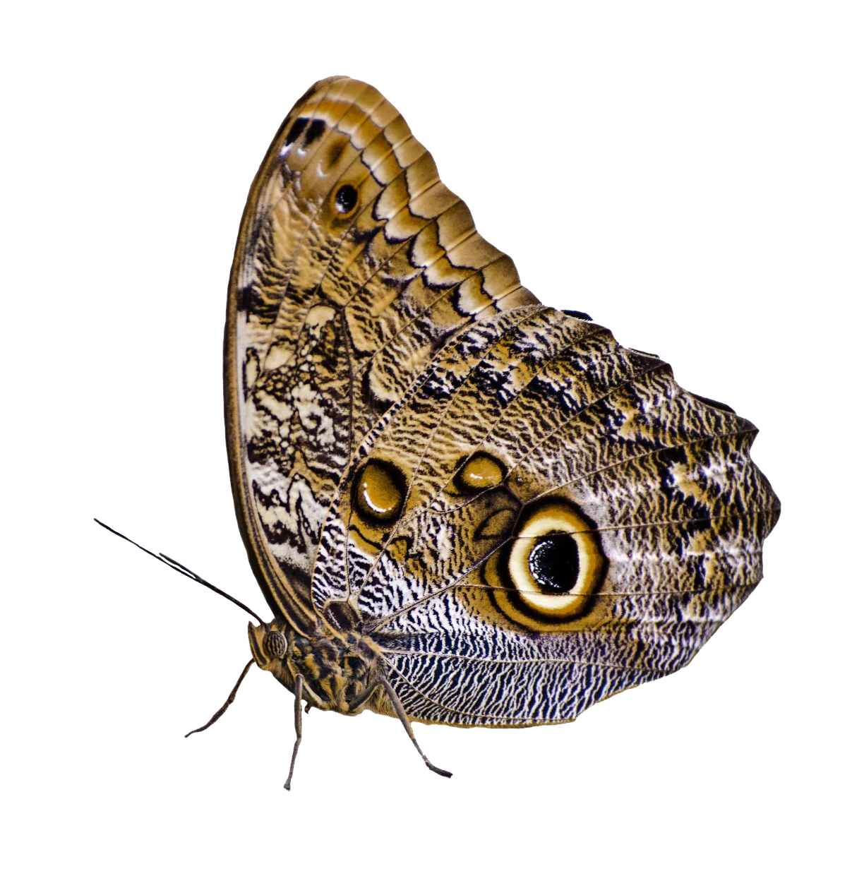 Butterfly PNG Image Butterfly, Png, Png images
