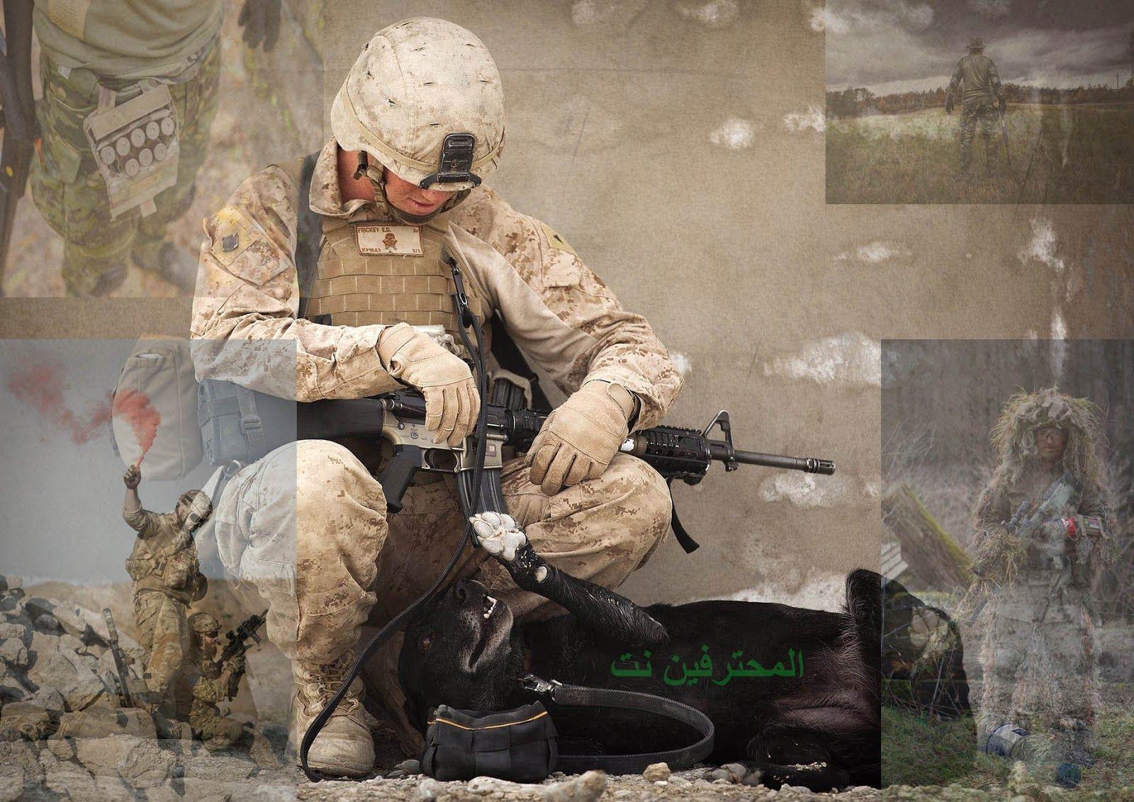 تحميل افلام للكبارفقط 2021 أفلام حصرية افلام اكشن افلام رعب افلام رومانسي ننشر لكم موقع جديد يتربع على مواقع مشا Military Dogs Work With Animals Your Dog