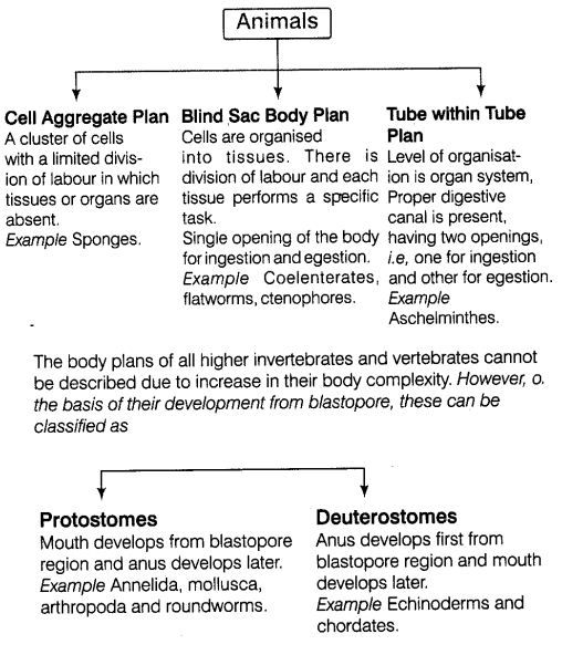 animal-kingdom-cbse-notes-class-11-biology-5 | Science | Vertebrates