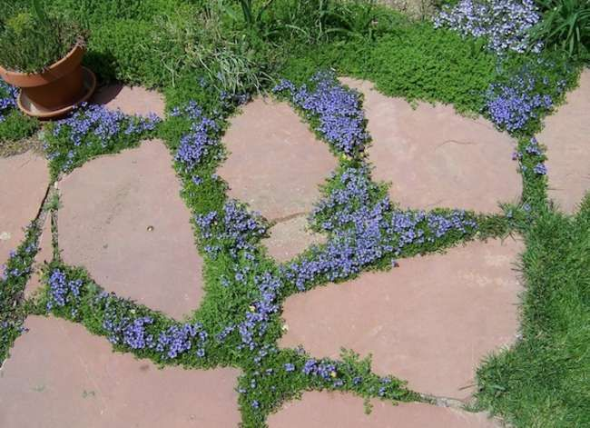 "Goodbye Grass: 13 Inspiring Ideas for a ""No Mow"" Backyard ... on No Mow Backyard Ideas id=58555"