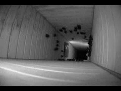 13 Chimney Swifts Going To Roost And Inside Swift Roost Cool Gifs