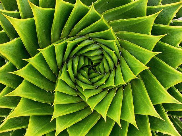 Green Spiral Fractals In Nature Patterns In Nature Spirals In