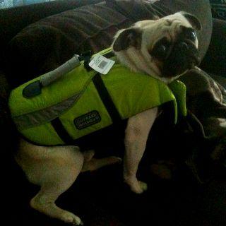 Pug safety