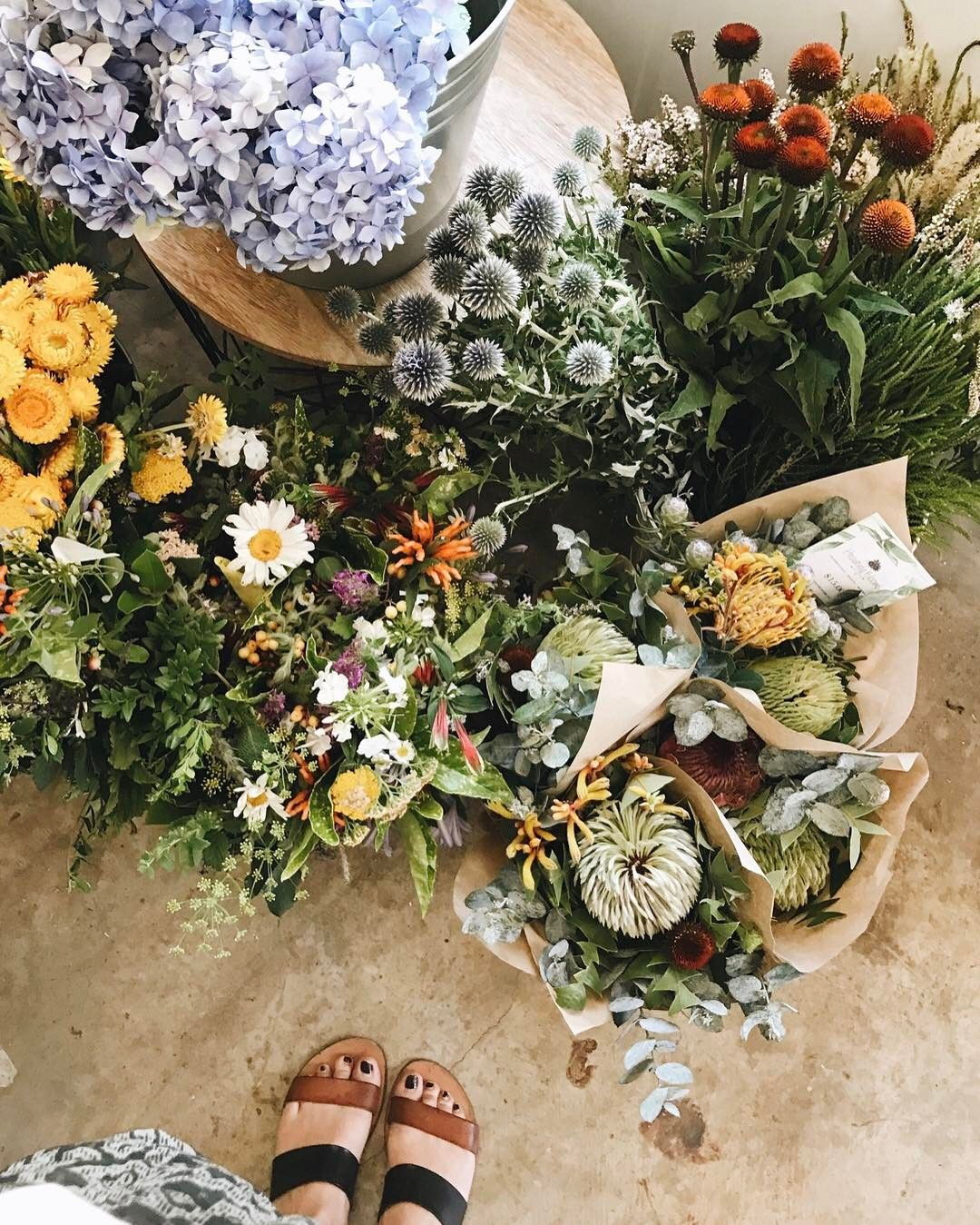 Pin by chlo on flora pinterest spring flowers australia and spring flowers at the eumundi markets in australia mightylinksfo