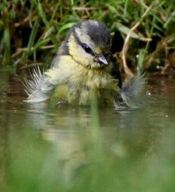 """""""Bath time. Credit to Clive Fisher."""""""