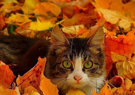 Autumn Kitty Desktop Nexus Wallpapers Fall Cats Autumn Animals Cats
