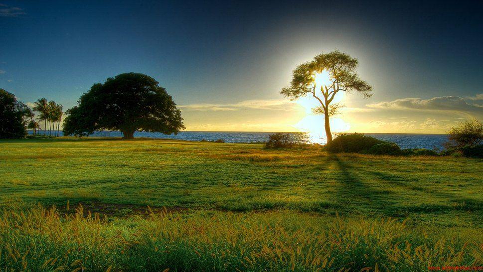 Sombra naturaleza pinterest naturaleza sombras y for Naturaleza hermosa