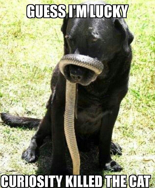 Pin by Trinida Sparacino on meme | Black labrador retriever