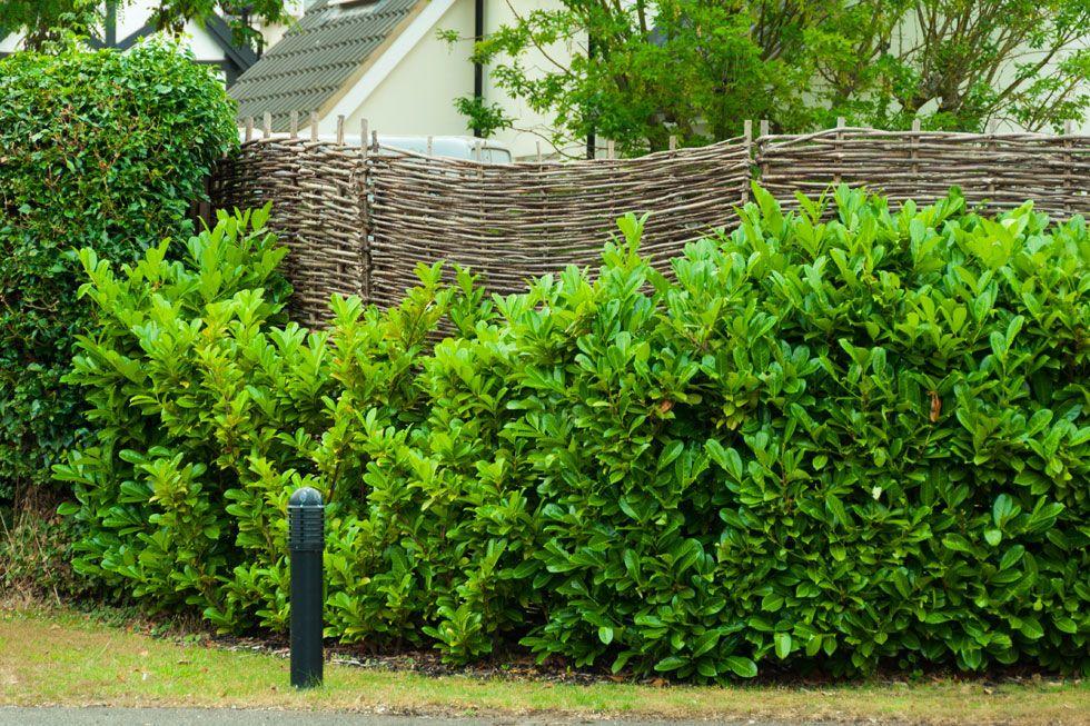 Sichtschutz im Garten 22 raffinierte Ideen  Anregungen Photography