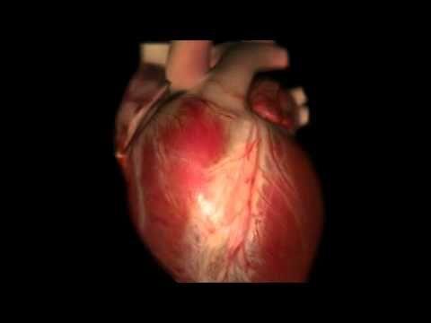 How the Heart Works 3D Video.flv - YouTube | Ekg | Pinterest ...