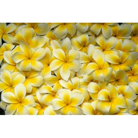 Electronics Plumeria Flowers Flowers Flower Pictures
