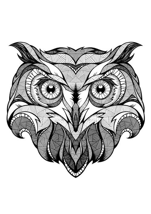 Owl Face Owl Coloring Pages Owls Drawing Owl Art