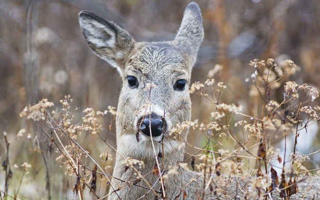 And deer.