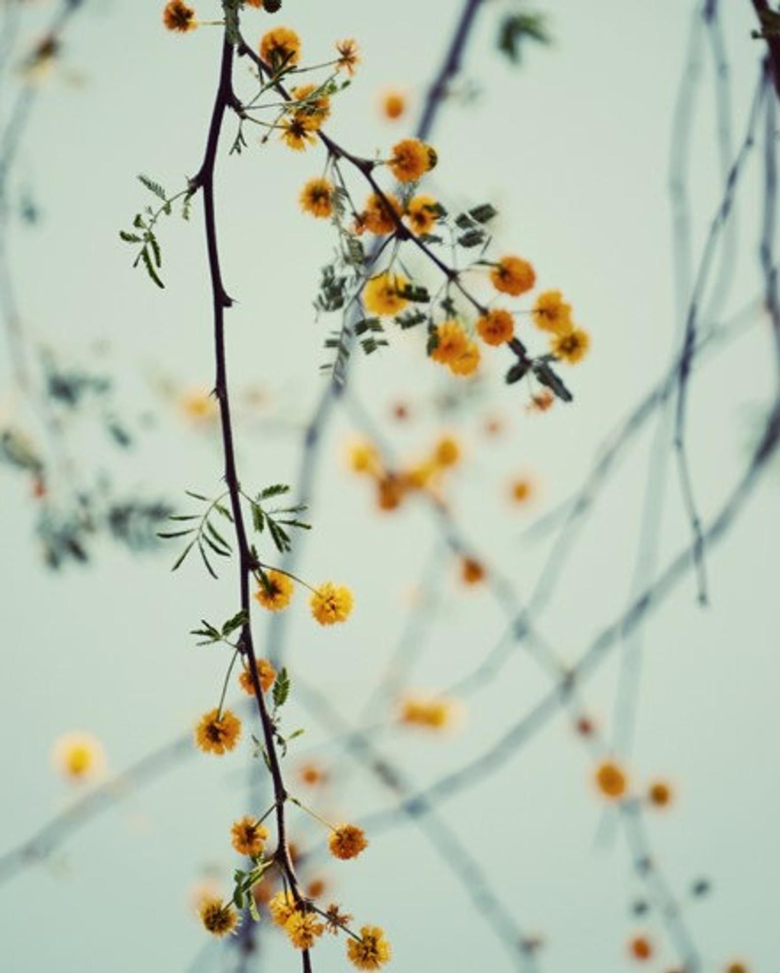 Tree art print, wall art nursery , yellow girls room, nature art print, botanical wall art, floral tree art,fine art print