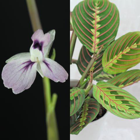 Blau Blühende Pflanzen Und Blumen Bestimmen