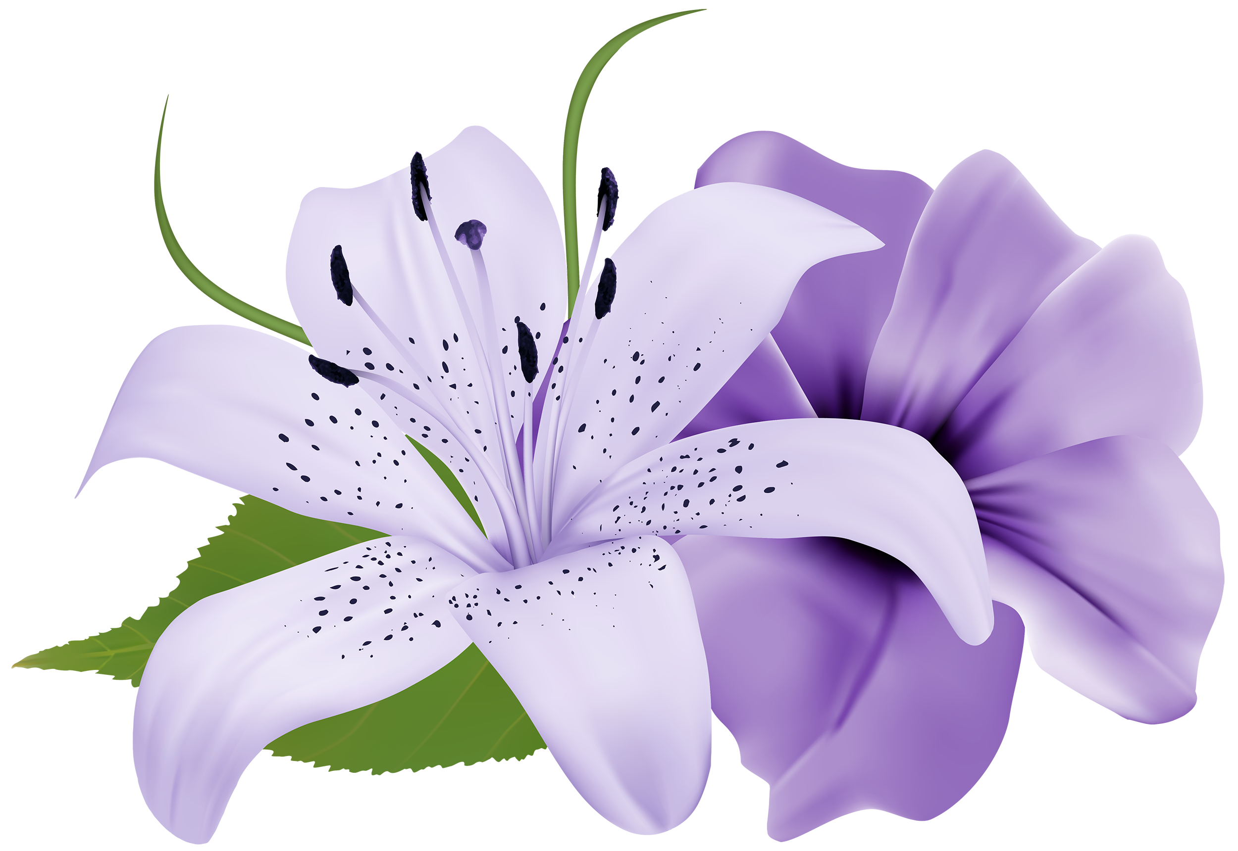 purple flowers Saferbrowser Yahoo Image Search Results