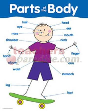 Parts Of The Body Basic Skills Chart Learning Spanish Spanish Lessons For Kids Spanish Worksheets