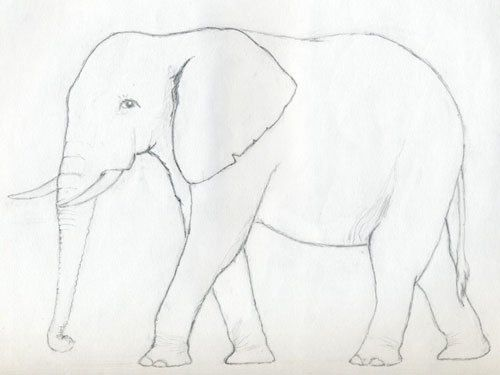 elefant einfach zeichnen lernen  tutorial  elefanten