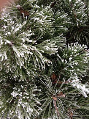 Wohnbrise: Garten, Winter, Schnee