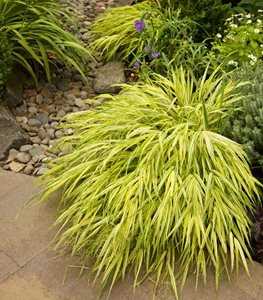 Top 20 Shade Plants – Perennials, Flowers, and More | Garden Design #shadeplantsperennial