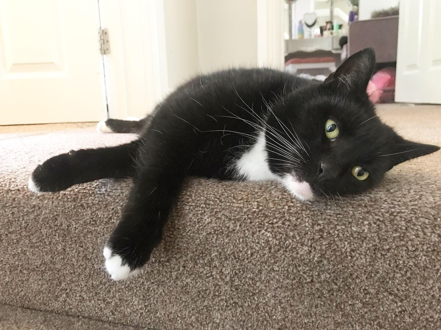 Tuxedo Cat My Beautiful Boy Pudd Age 7 Cool Cats Cats Of Instagram Cute Cat