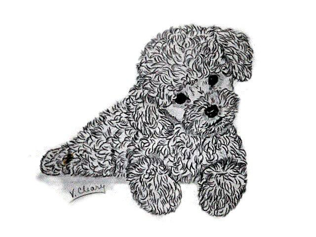 Poodle Puppy By Gingerc Poodle Drawing Puppy Drawing Poodle