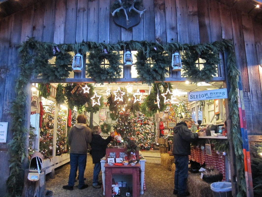 Northern Lights Christmas Tree Farm - Home | Christmas Farm Store ...