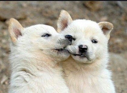 Great Korea Chubby Adorable Dog - 46210842d55d98e49d7081ba6b3951e8  Gallery_271346  .jpg