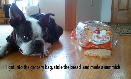 Shame Sandwich