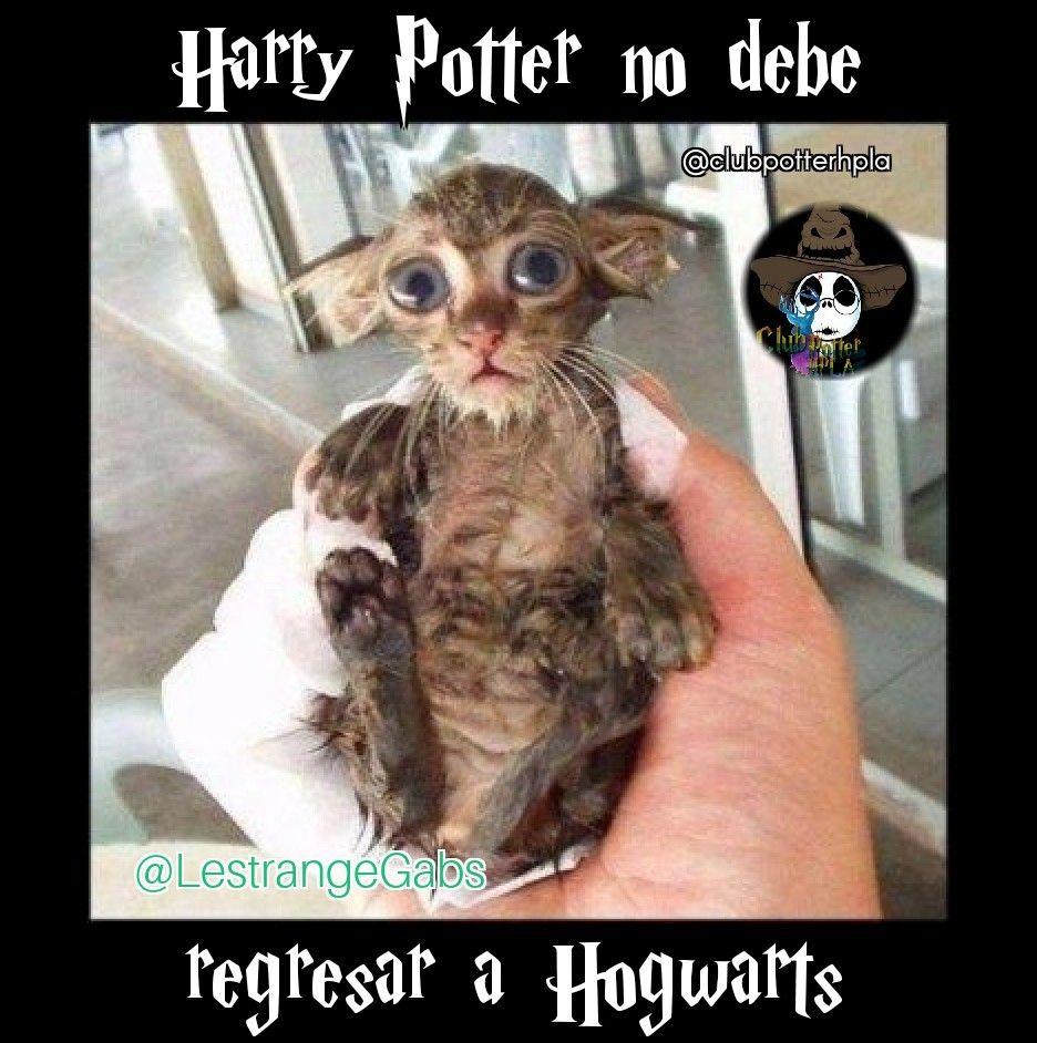 Pin de Gabriela Lestrange en Memes Potterheads ¾ Harry