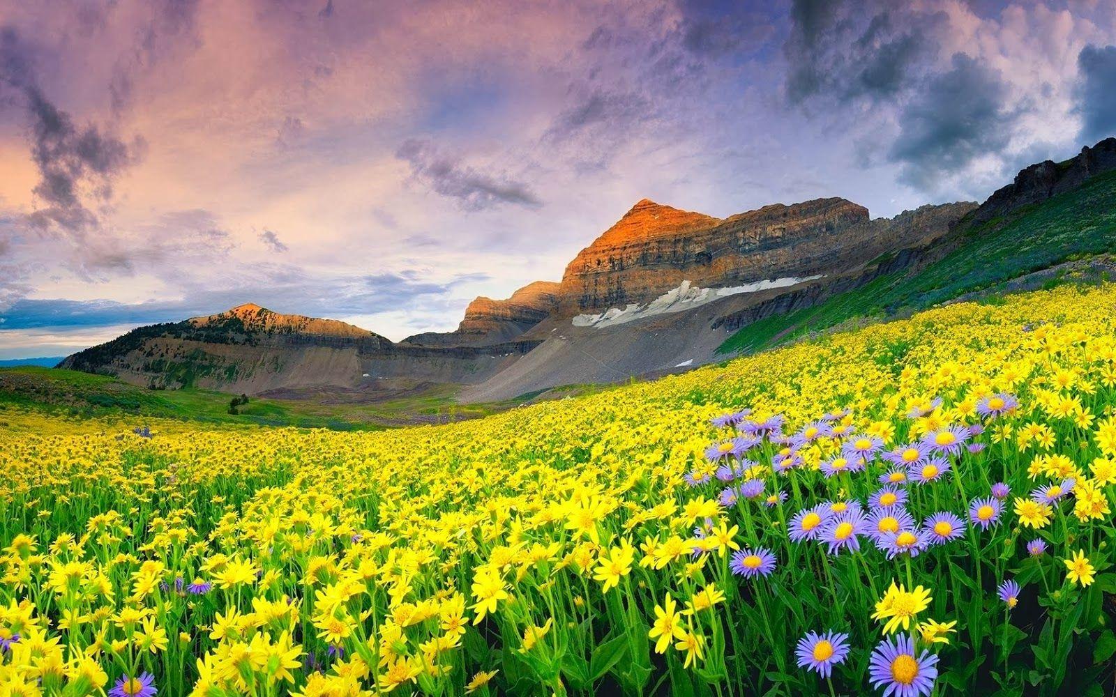 Spring Mountain Landscape Flowers Purple Colored Hills: Paisaje Hermosos Para Fondo Celular En Hd 18 HD Wallpapers