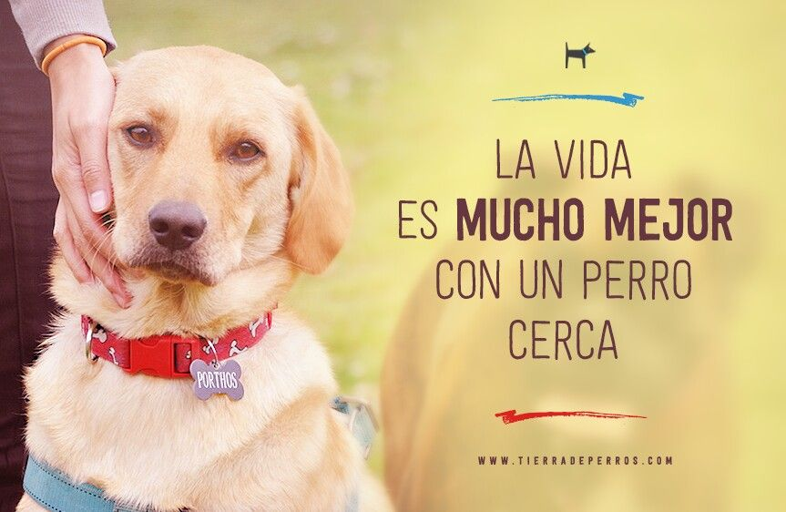 Quotes Frases Tierradeperros Guarderia Canina Hotel