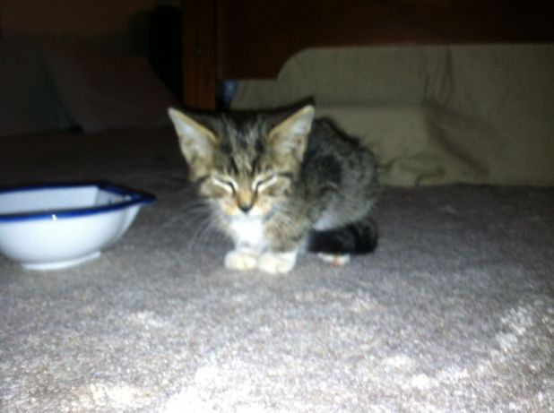"""From """"Andy Carvin rescues a kitten"""" story by Erica Smith on Storify — http://storify.com/ericasmith/andy-carvin-rescues-a-kitten"""