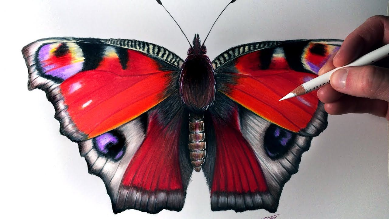 How To Draw A Butterfly Youtube In 2020 Realistic Pencil Drawings Color Pencil Drawing Art Drawings Simple