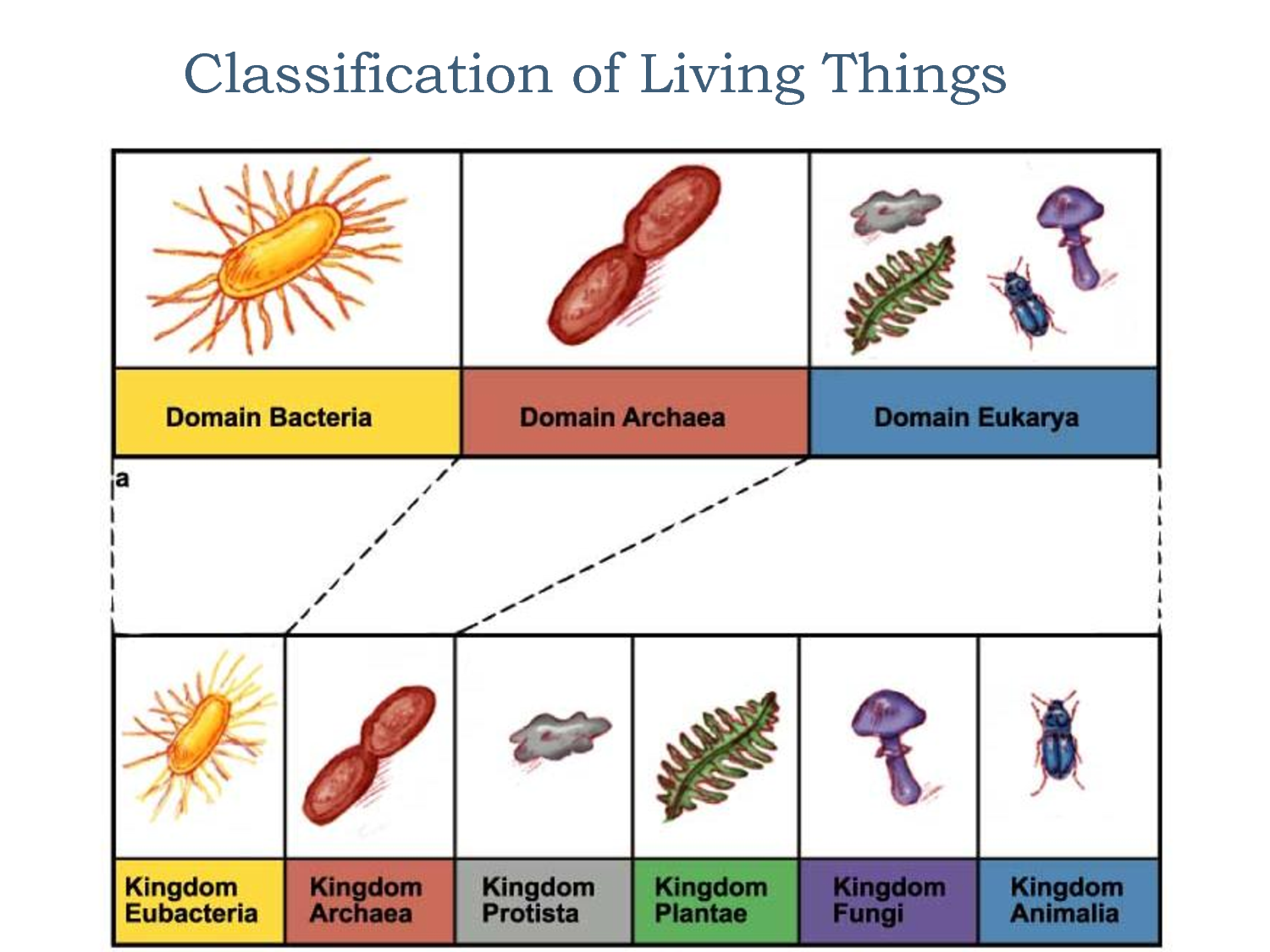 Survey of the 6 Kingdoms Biology units, Classification