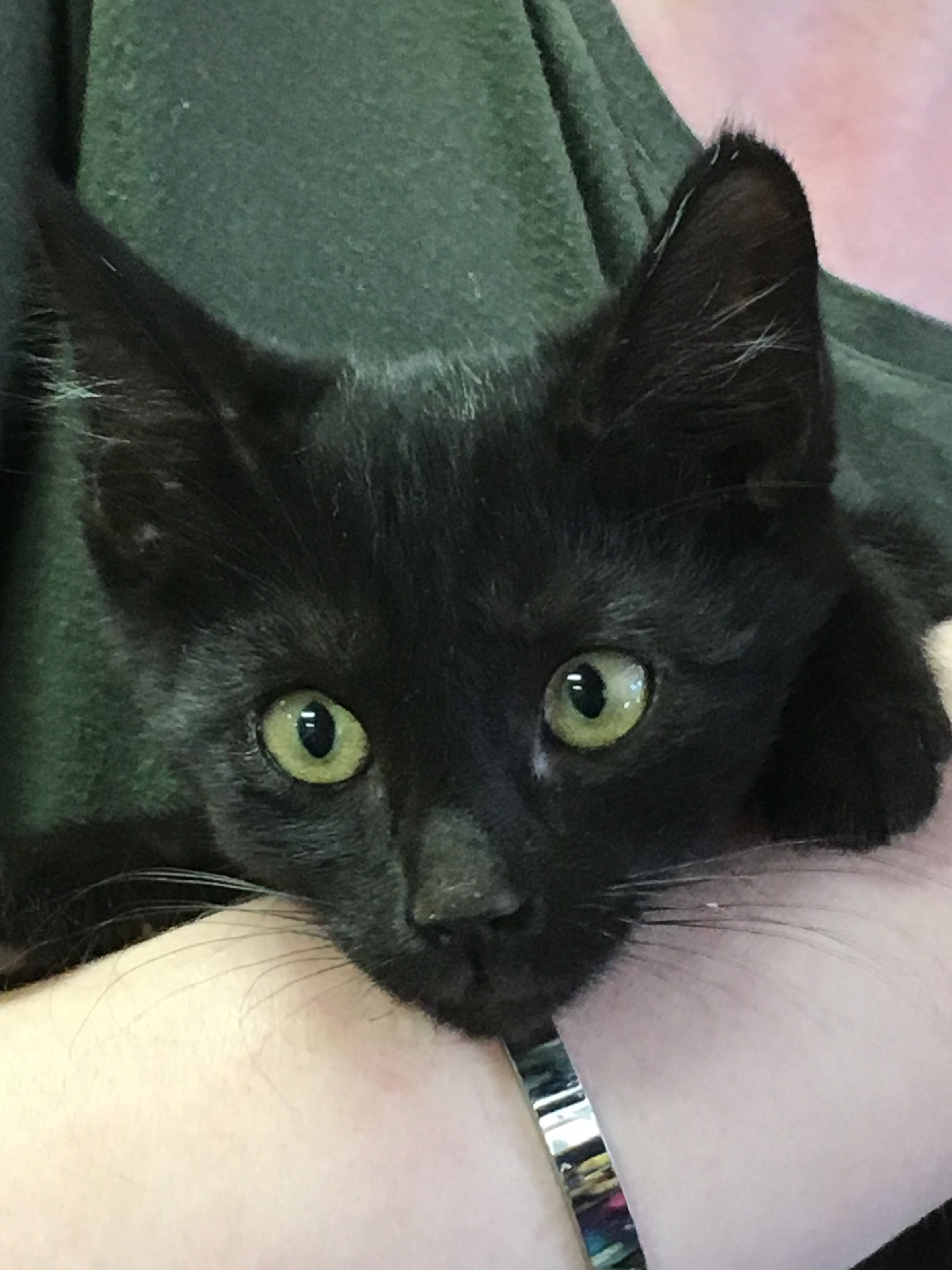 Adopt Pepper on Saving cat, Puppy adoption, Animal rescue