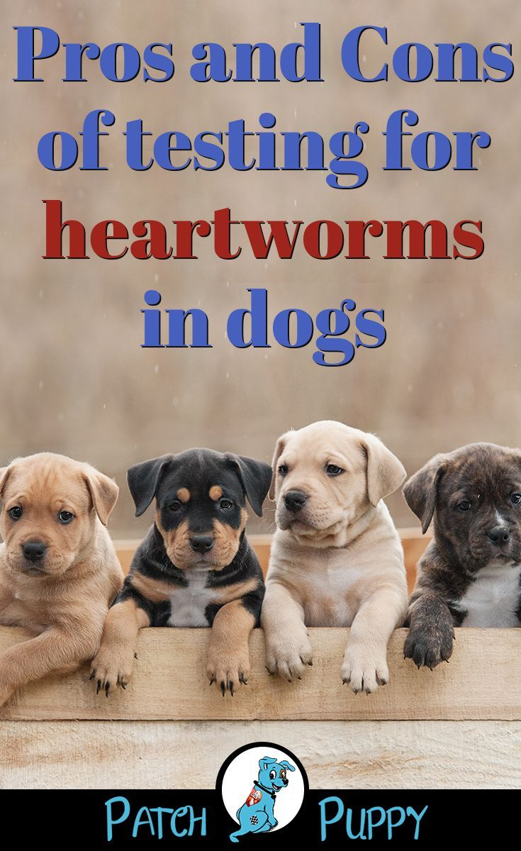 Heartworm why prevention is best Worms in dogs, Dogs