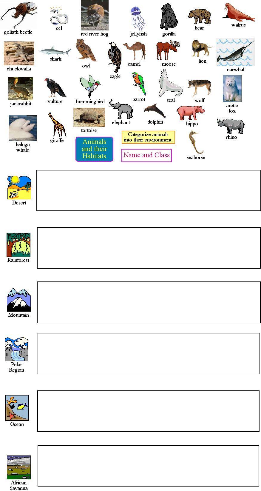 animal classification Teaching science