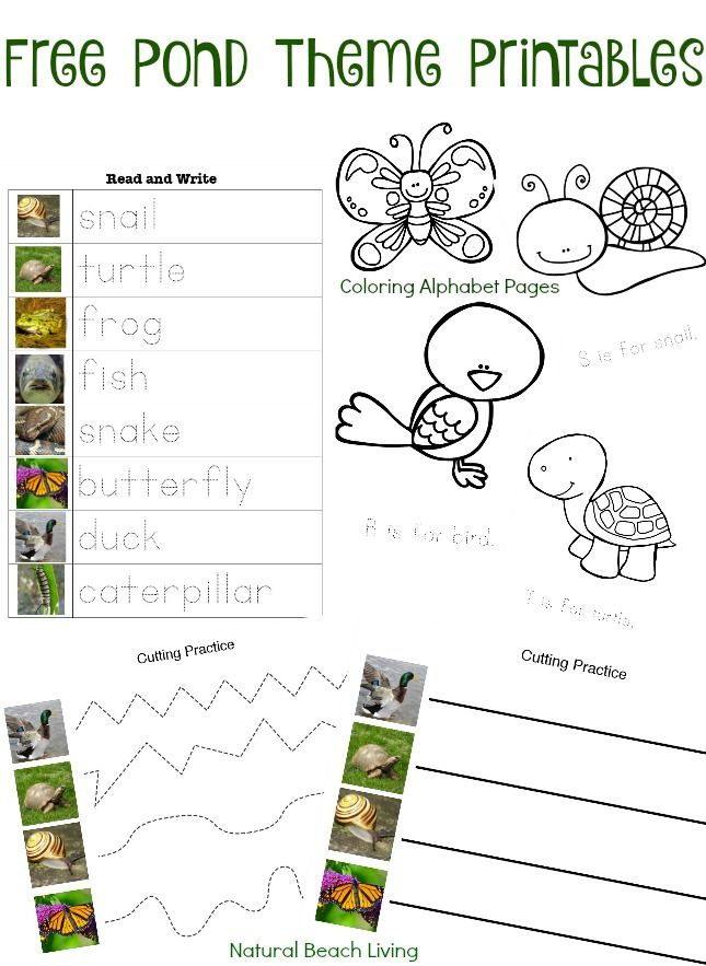 pond theme activities stem free printables coloring pages preschool skills montessori inspired natural learning outdoor learning science math