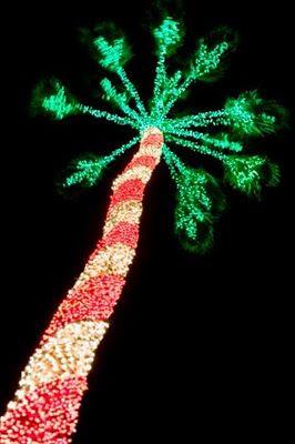 Candy Cane Christmas Palm Tree Florida Christmas Tropical Christmas Decorations