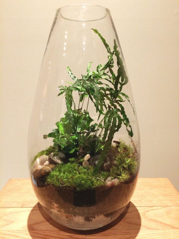 Unique Large Beautiful And Elegant Living Plant Fern And Moss Glass