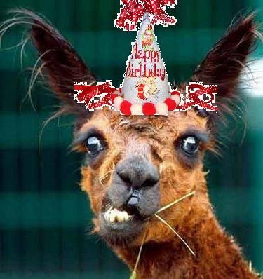 HAPPY BIRTHDAY Funny Llama